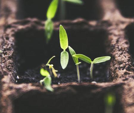 young growing plants closeup