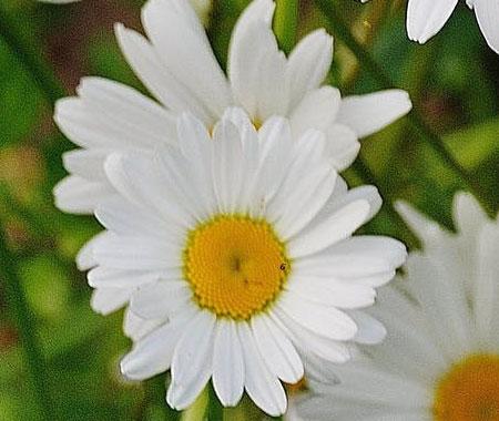 Flower yellow in white closeup